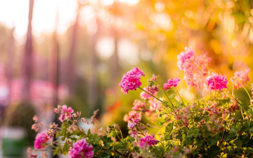 How to Grow Your Landscaping Business